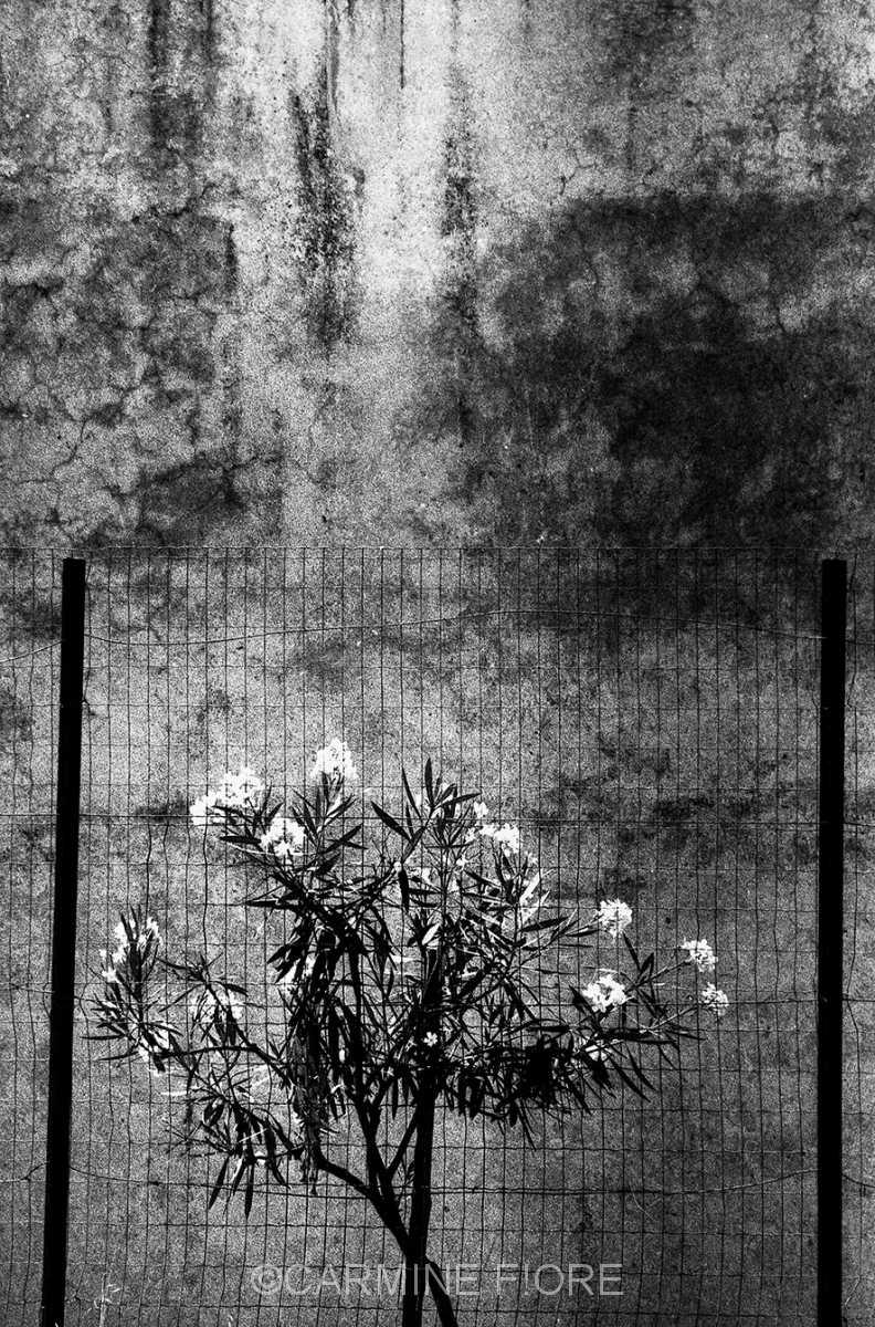 fiori-rete1480
